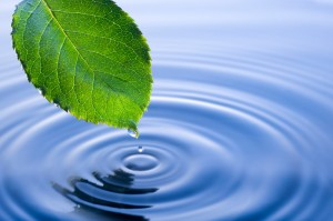 leafdripwater1000